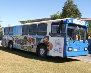Sunshine coast fusion bus